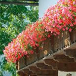 Servicewohnen-Blumenbalkon