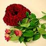Rosen zum Valentinstag in Bayerisch Gmain