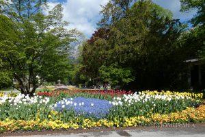 Blumenpracht im Kurpark Bad Reichenhall